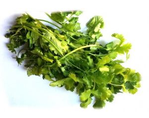 FRESH CORIANDER CILANTRO LEAVES | Buy fresh Coriander Leaves, Coriander Leaves & more!